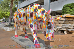 cow in austin texas